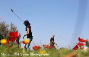 papaveri palestina